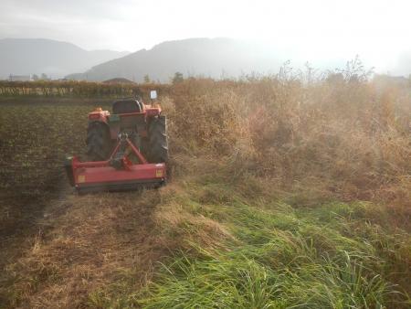 大豆の収穫 (1)
