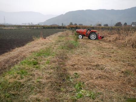大豆の収穫1 (7)