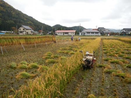 下の田の稲刈り (3)