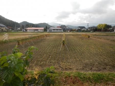 下の田の稲刈り (7)
