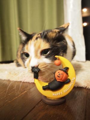猫さんクンクン…