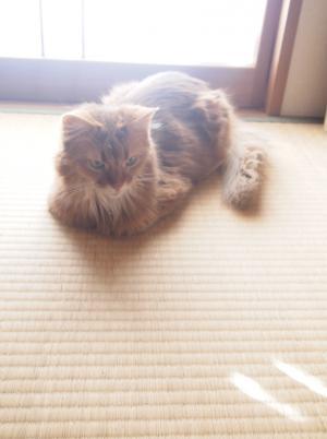 畳の上でまったり。
