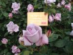 神代植物公園の薔薇(ブルームーン)