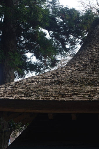 拝殿の檜皮葺