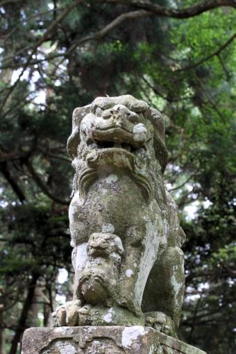 大麻山神社の子連れワンコ