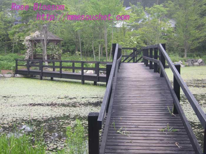 bridge20130629.jpg