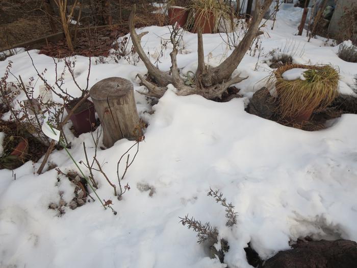 garden20140122.jpg