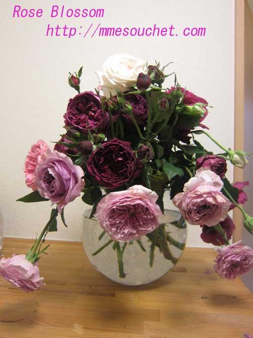 rose20130427.jpg