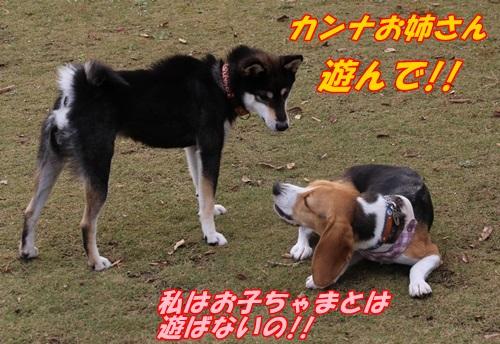 IMG_3676.jpg