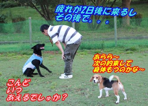 IMG_7891_20130912141548a6e.jpg