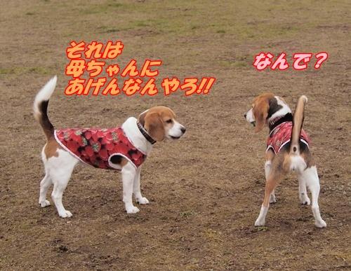 P3289386.jpg
