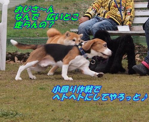 P3289482_20130331161752.jpg