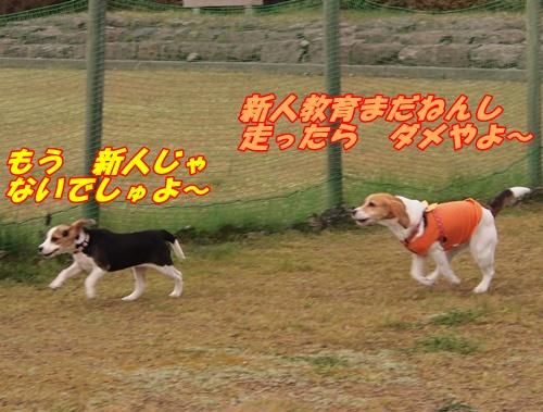 P4150666.jpg