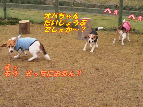 P4170988.jpg