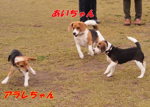 P4171006.jpg