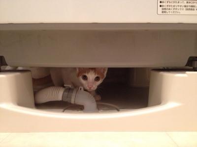 ここ洗濯機