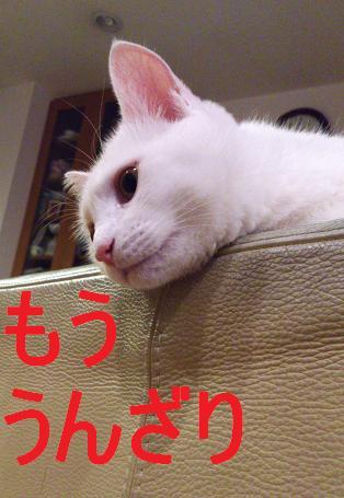 DSC_1333.jpg