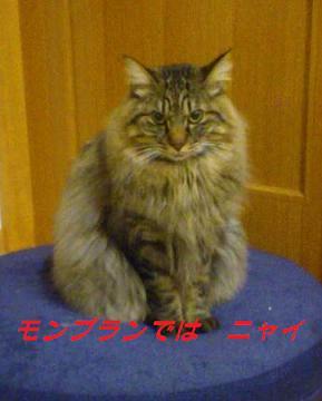 LINEcamera_share_2014-09-23-21-02-41.jpg