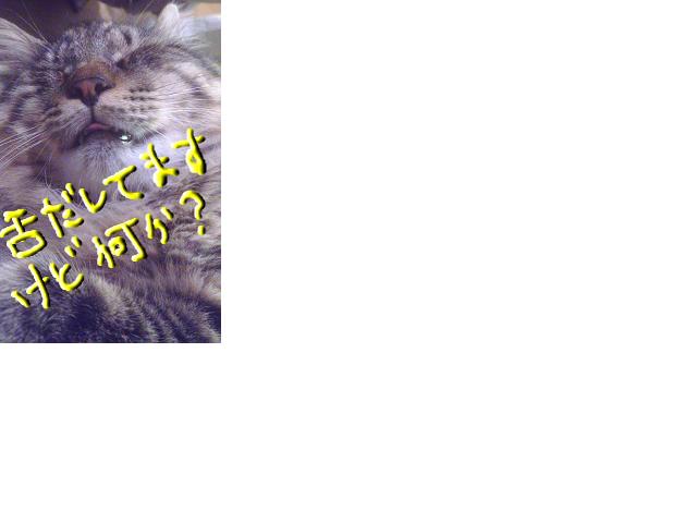 snap_konekogakita_20137653415.jpg