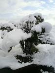2013年11月11日・初雪でドカ雪