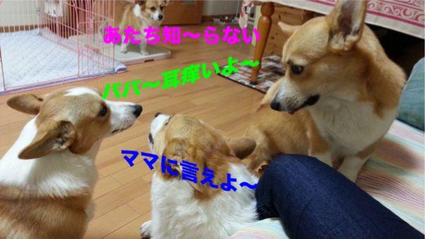 1_20131104104626ded.jpg