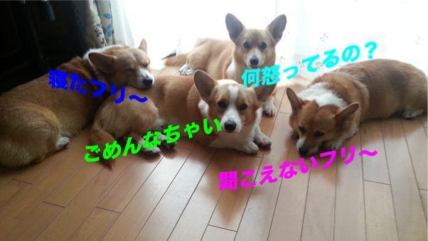 1_20131105102720cc4.jpg
