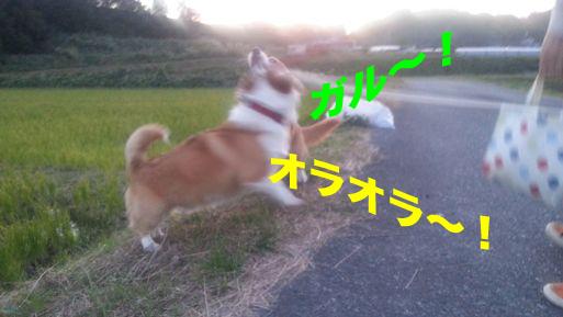 1_20131108225334fea.jpg