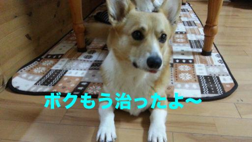 1_2013111110471798d.jpg