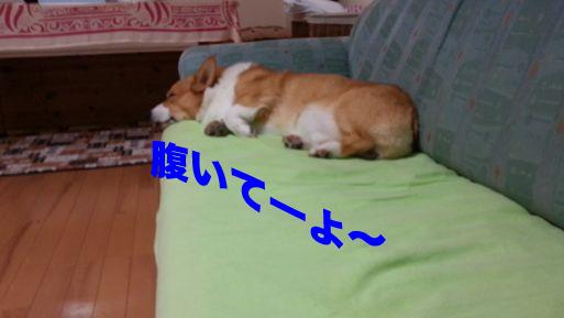 1_20131113164055d39.jpg