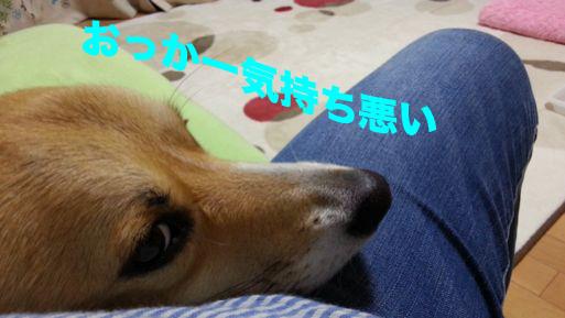 1_20131120094736960.jpg