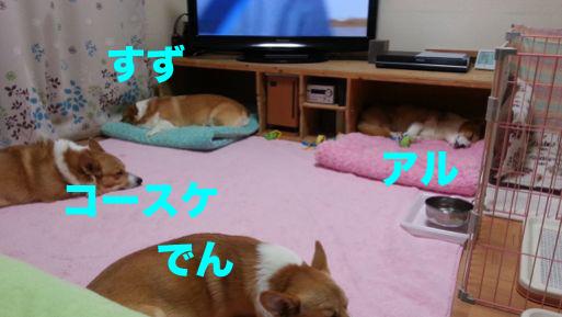 1_20131121140310942.jpg