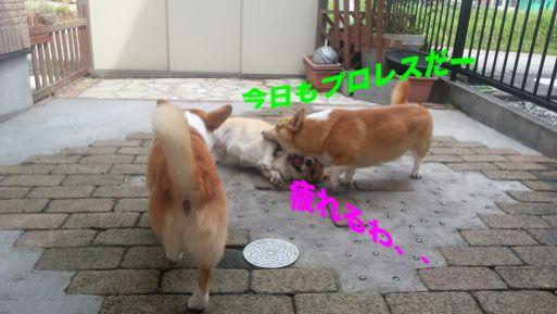20131004_101729_1.jpg