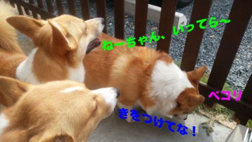 20131004_101949_1.jpg