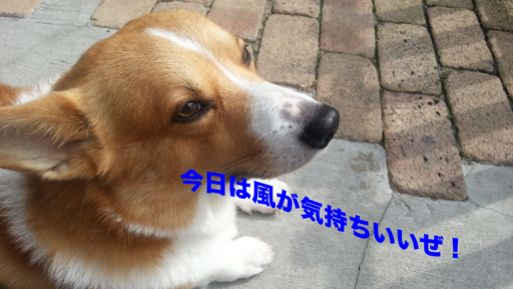 20131004_102123_2.jpg