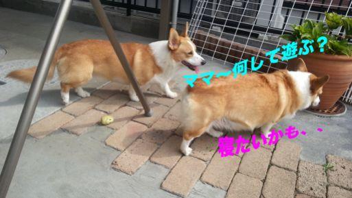 20131004_102203_1.jpg