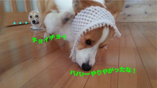 20131008_101125_1.jpg
