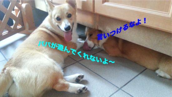 20131011_092026_1.jpg
