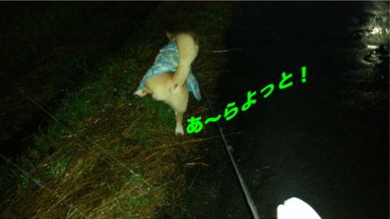 20131015_172726_1.jpg