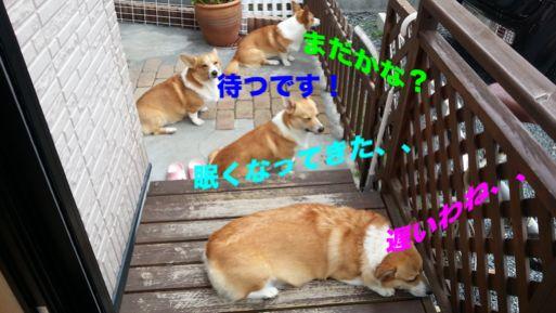 20131022_084658_1.jpg