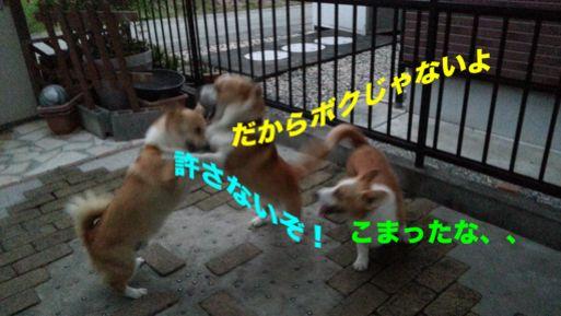 20131022_171719_1.jpg