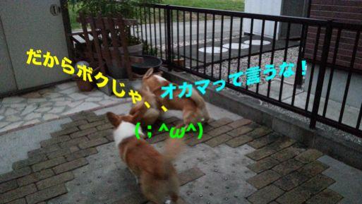 20131022_171721_1.jpg