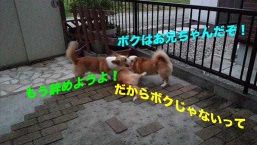 20131022_171725_1.jpg