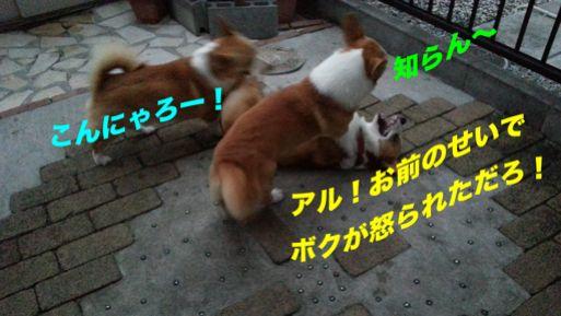 20131022_171738_1.jpg