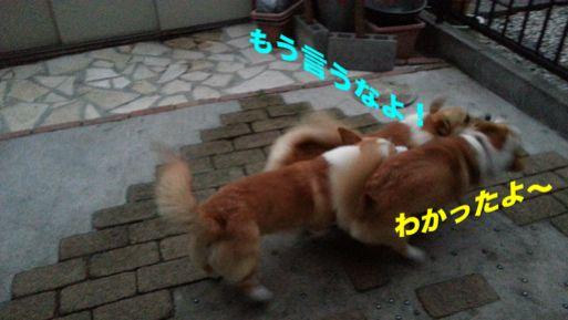 20131022_171757_1.jpg
