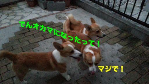 20131022_171759_1.jpg
