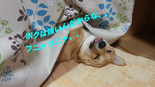 20131022_230420_1.jpg