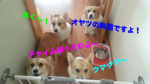 20131029_120408_1.jpg