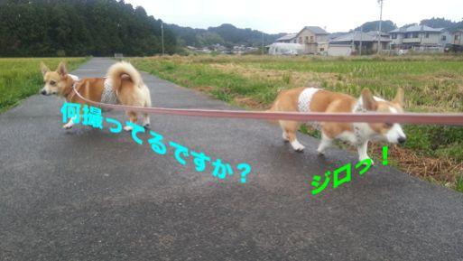 20131029_160312.jpg