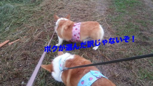 20131029_162749_1.jpg
