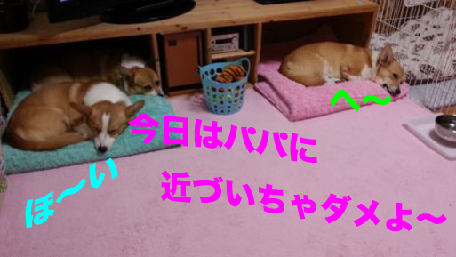 2_20131113164058944.jpg